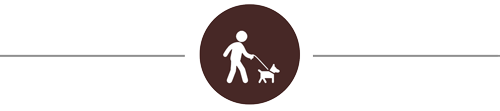 dog-walking-icon